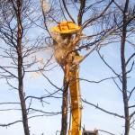 Лесной мульчер SERRAT CABEZAL F5 2